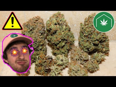 GreenBox Grown Indoor Grow Section:  Growing Cannabis for Beginners
