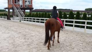 Жашковский конный иподром