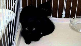 双頭の怪物(黒猫バージョン) thumbnail
