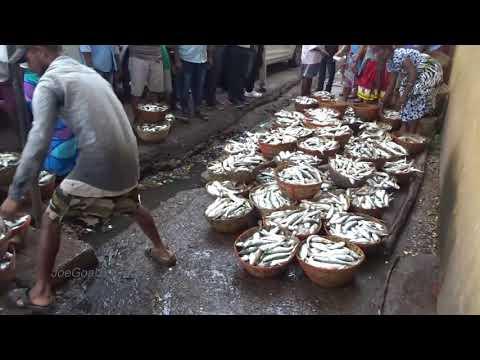 Wholesale fish market panaji