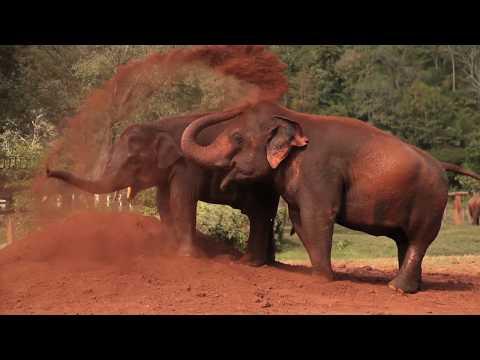 Elephant Nature Park, Chiang Mai, Thailand - Unravel Travel TV