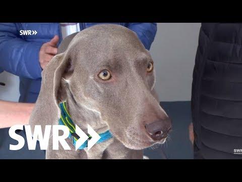 Ein Hund, ein Kaninchen und ein lahmendes Pony: Folge 32 | Tierarztgeschichten