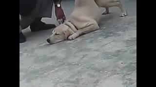 Training with prashant