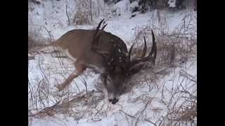 """Saskatchewan Deer hunt with Sask Can Outfitters, 170"""" 10-pointer"""