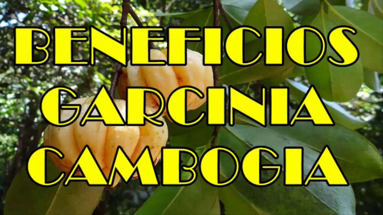 La Garcinia Cambogia Planta Milagrosa Que Te Ayudara A Bajar De