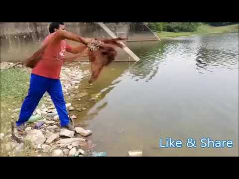 Net Fishing In Malaysia । Village Fishing । জাল দিয়ে মাস ধরা