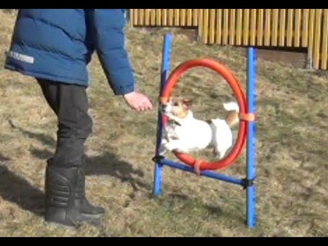 Milo the dog - Jumping through a ring!