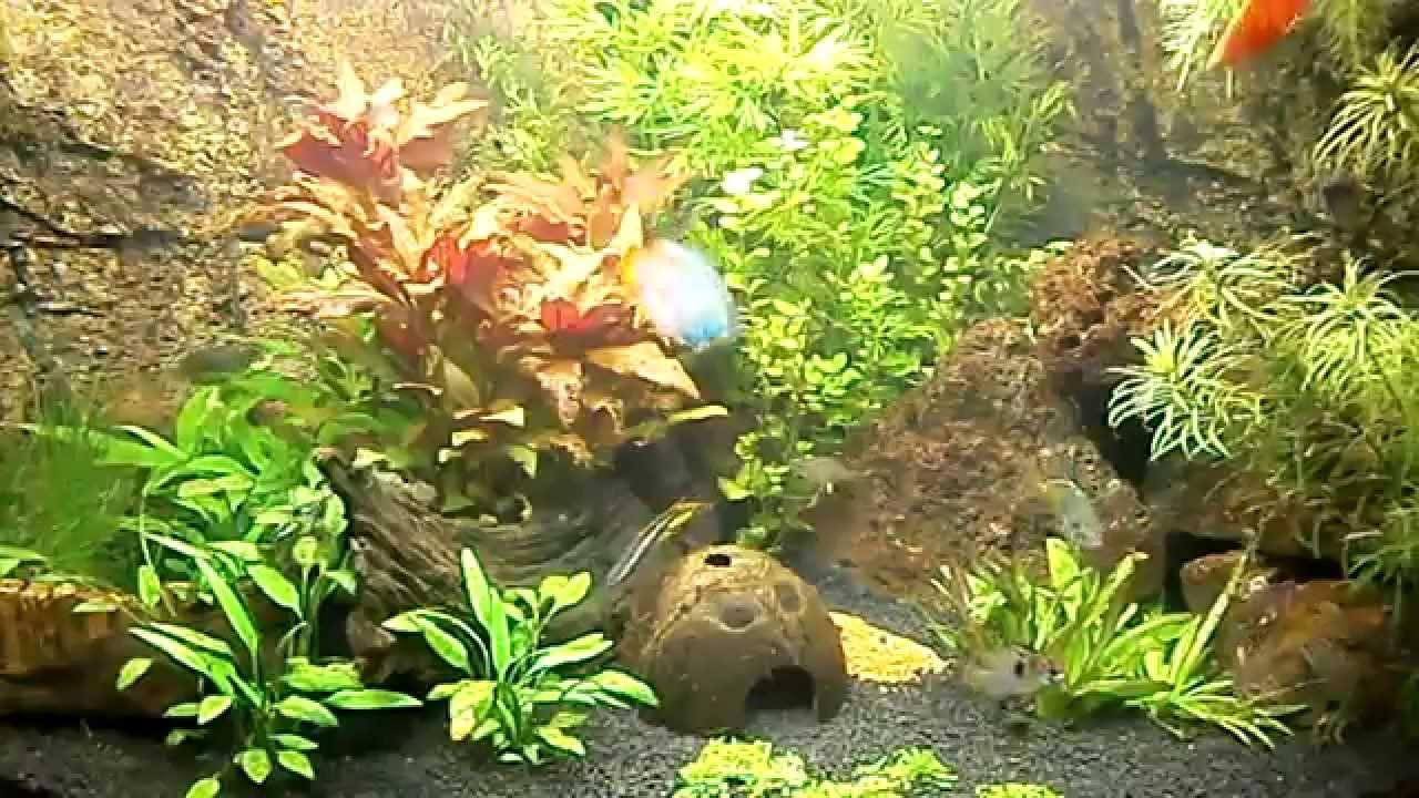 Juwel Trigon 190 liter aquarium   YouTube