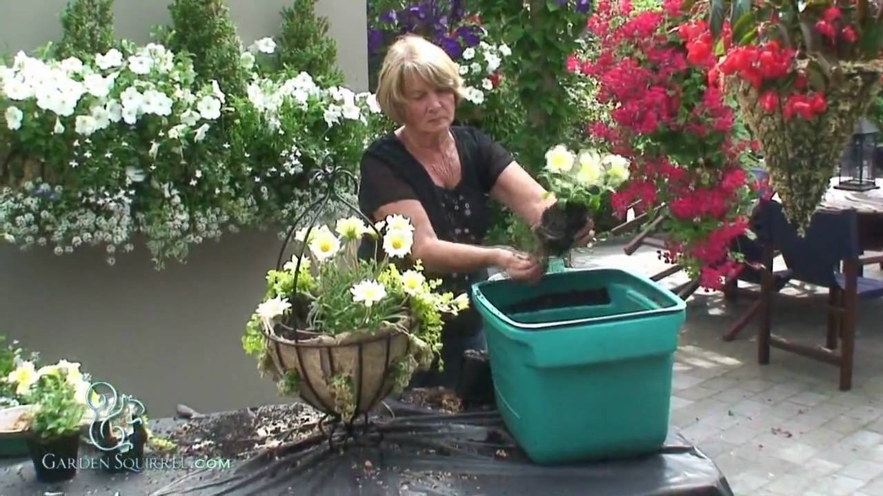 How To Make A Hanging Basket Flowers : How to make a mixed summer hanging basket advanced