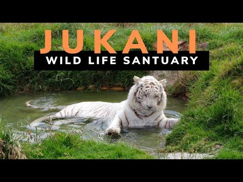 Jukani Wildlife Santuary - Plettenberg Bay , South Africa