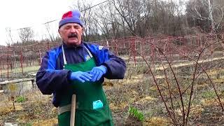 Морковь: наша правильная технология выращивания высокого урожая !