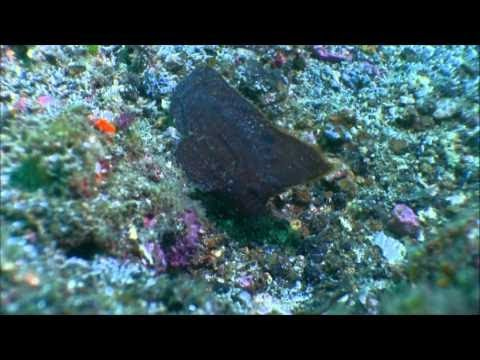 The Philippines - The Coral Triangle