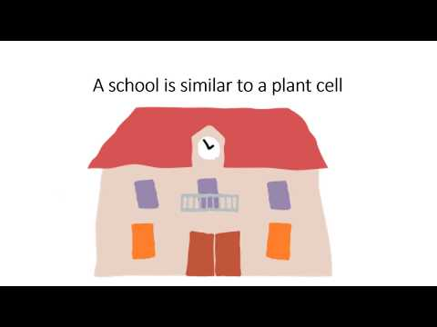Student Example of Plant Cell Digital Story Explanation