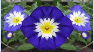 видео Многолетние растения, цветущие с начала и до конца лета!