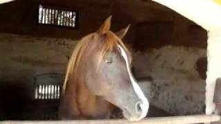 ARAB HORSES Trip to Mona Depot Pakistan