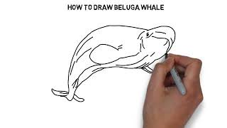 How to draw Beluga whale YouTube