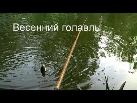 Весенний голавль  Май 2012г