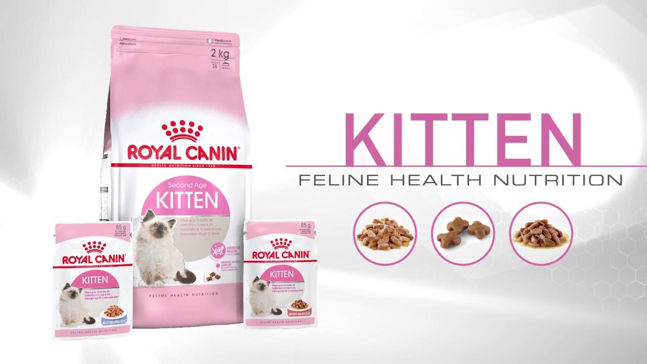 Royal Canin Kitten Youtube