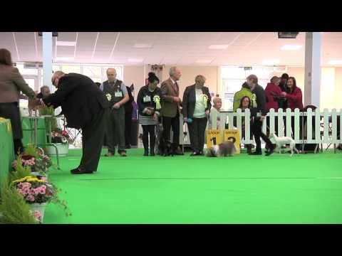 WELKS Dog Show 2016 - Toy group  FULL