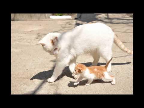 Best Funny cat 2017 Best Cat Ever