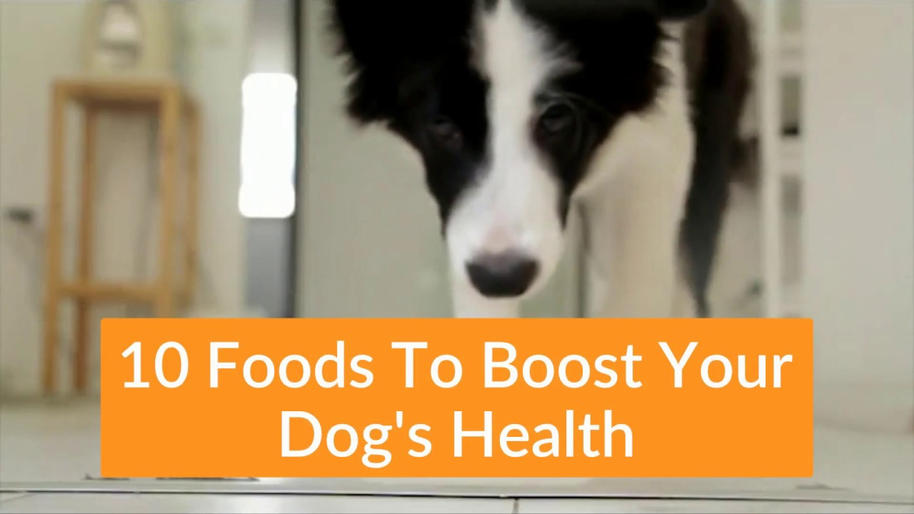 10 Foods To Fight Disease In Dogs    Boost Your Dog's Immune System