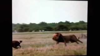 Repeat youtube video Hyena killer