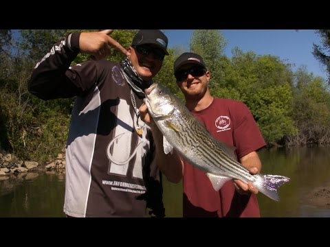 Striper fishing the Stanislaus River!