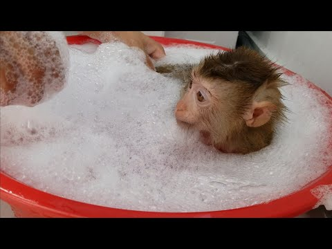 Monkey Baby Nui | NUI take a shower