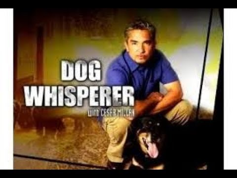 """Mandela Effect The Show """"The Dog Whisperer"""" Has Never Existed In This Reality!! Voting Video #224"""