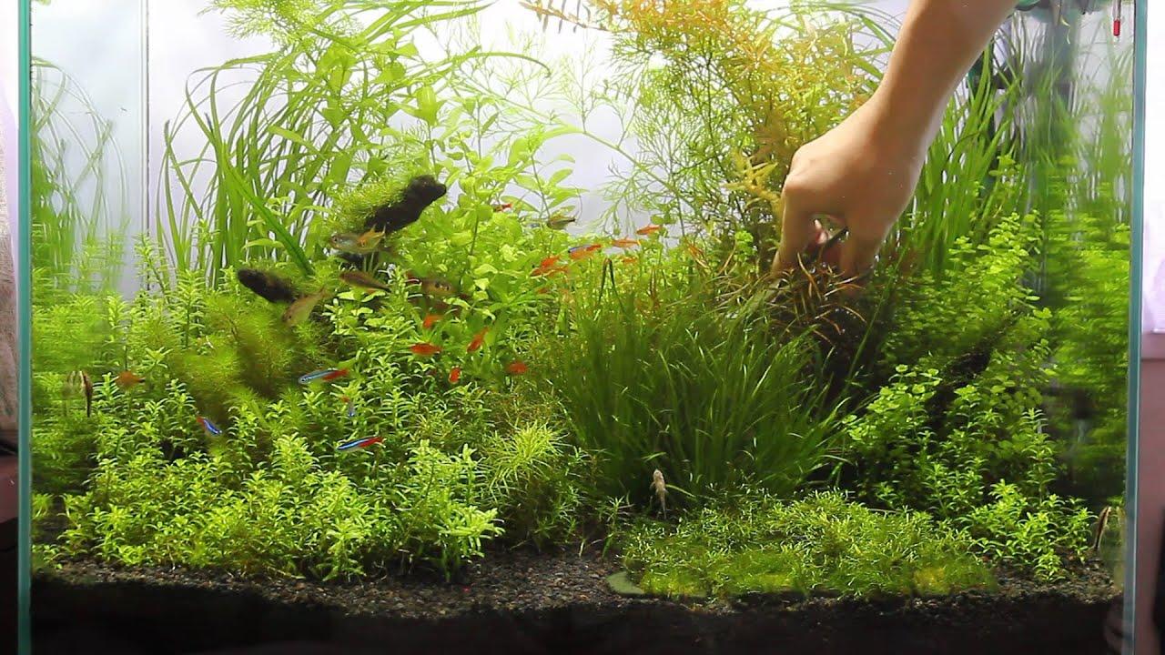 #16.富士砂 水草水槽 ロタラのトリミング(Trimming of Aquatic Plants ...