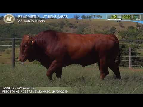 LOTE 028