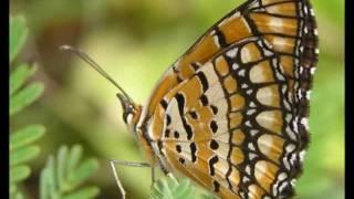 Butterfly Waltz - Brian Crain