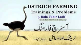 Ostrich Farming Training+Probs ep3 Raja Tahir Latif #PakOstrich