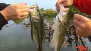 When Bass Strike Topwater