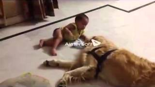 Funny video Golden retriever dog Marcos with Baby girl Thumbnail