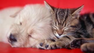 милые картинки с кошками