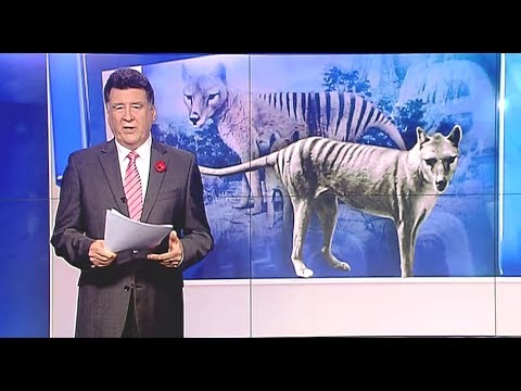 Thylacines in South Australia's southeast - Today Tonight