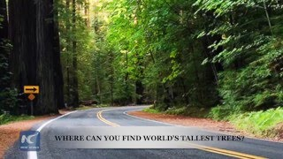 Where can you find world's tallest trees?