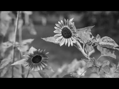 Gillian Welch - Happy Mother's Day