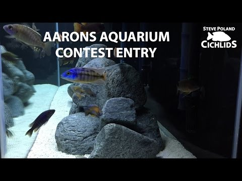 Aarons Aquarium 2000 Subs Steve Poland Cichlids Contest Entry