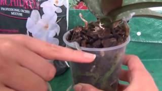 Видео курс: Как ухаживать за Орхидеями(Видео курс: Как ухаживать за Орхидеями. Какой грунт использовать, как пересадить и поливать., 2014-06-30T09:41:11.000Z)