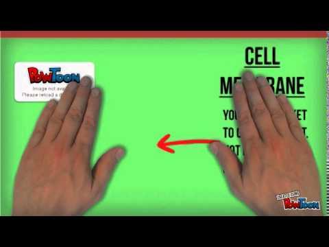 Cell Amusement Park Youtube