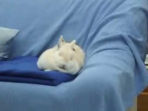 schlafendes häschen