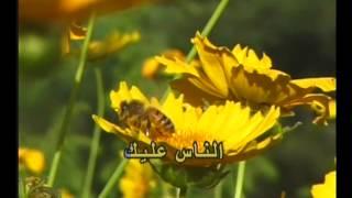 Law Naweit (George Wassouf) Karaoke