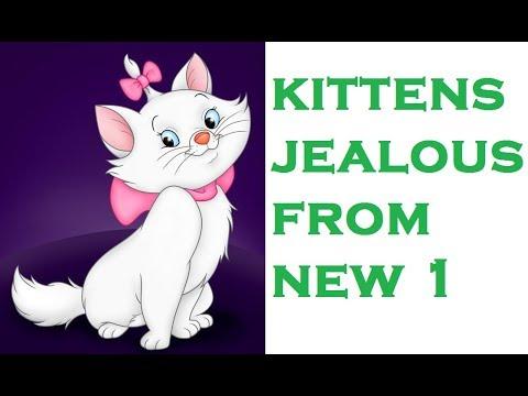 VLOG 2 KITTEN playing with LIZARD having A GUEST (new kitten)| 2017 funny JEALOUS KITTENS