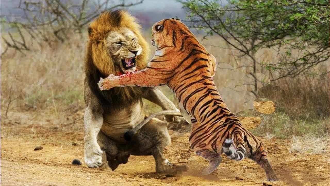 Tigres x