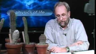 Physics of Life - Succulents and Flow