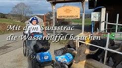 Mit dem Swisstrac bei den Wasserbüffeln in Bütschwil