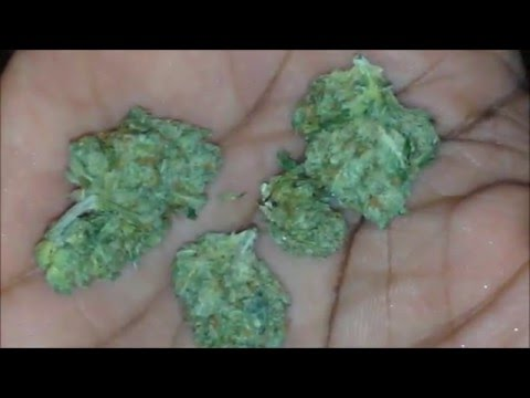 HOW TO GRIND A GRAM OF WEED!