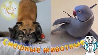 Новые приколы со смешными животными, смешными котами, собаками
